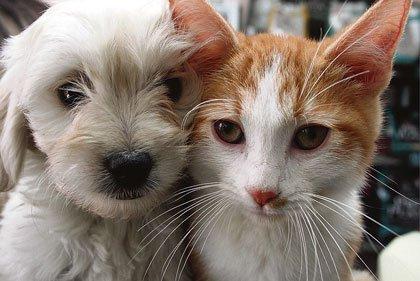 ¿Por qué enferman nuestras mascotas hoy?