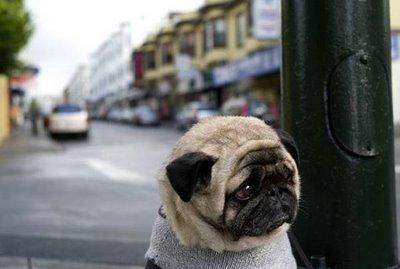 Depresión de los perros