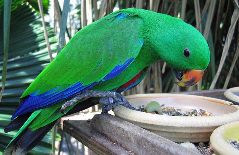 Alimentación de las Aves de Compañía