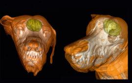 Como funciona el cerebro de los perros