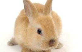 13 cosas que tal vez no conozcas sobre los conejos