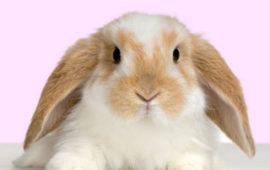 ¿Cómo enseñar a mi conejo a ir al baño?