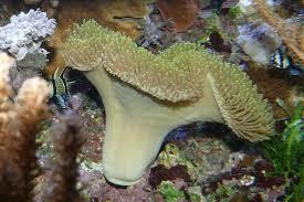 Acuario Marino: Los corales blancos