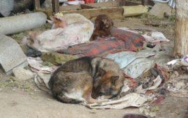 Celebramos Sentencia por maltrato animal con nuestros perros
