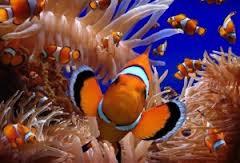 Limpieza y mantenimiento de los acuarios
