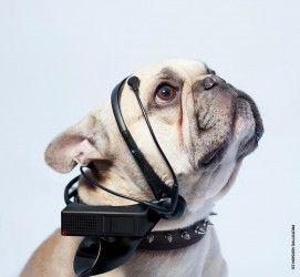 ¿Qué diría su perro si hablara?