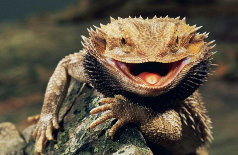Como detectar estrés y enfermedades en los reptiles