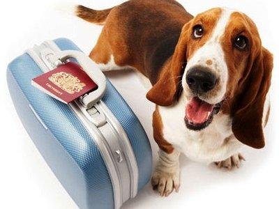 !Vacaciones! Guía para viajar con tu mascota