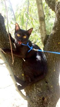 Gato en árbol