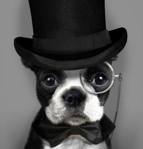 ¿Tienen memoria los perros?