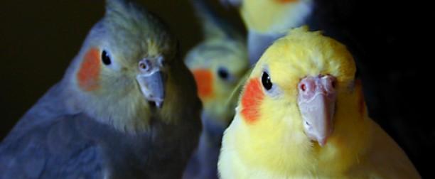Terapias asistidas con aves