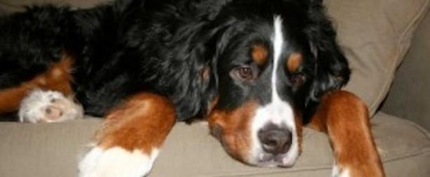 Enfermedades gastrointestinales en perros