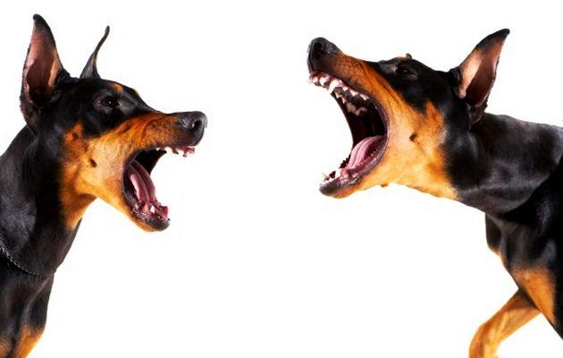Porque ladran nuestros perros