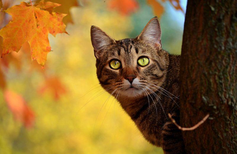 Consejos sobre como bajar al gato de un árbol
