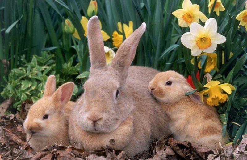 Consejos sobre la cría de conejos