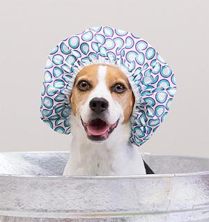 Con que frecuencia y con que debo bañar a mi perro