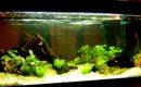 Algas, ¿buenas o malas para el acuario?