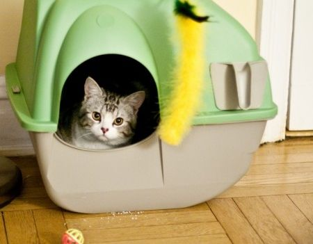 Seis trucos para que la arena de los gatos no huela