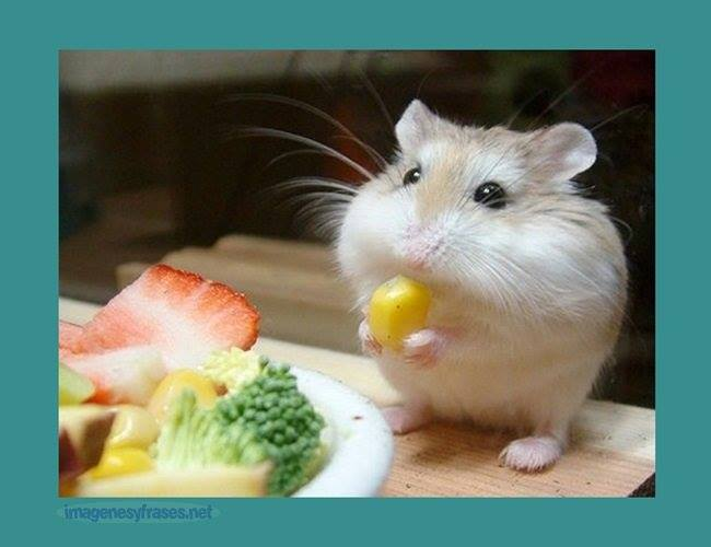 Síntomas carenciales en la nutrición de los hámsteres