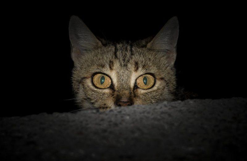 Comportamiento gatos