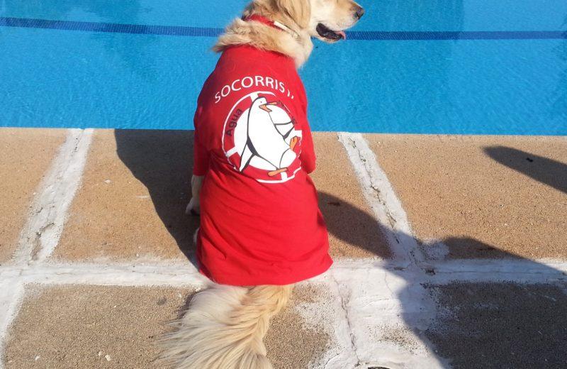 Salpicán, el evento acuático canino pionero en España, vuelve a El Casar por segundo año consecutivo