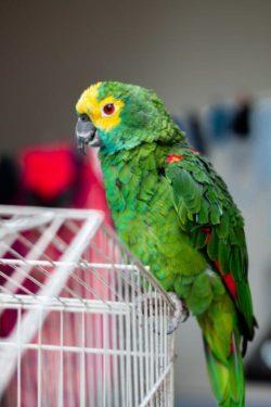 Protege aves calor
