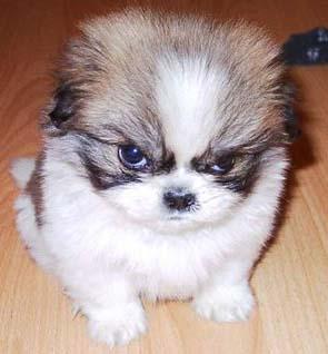 ¿Pueden sentir los perros celos?