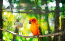 Protege a tus aves del calor