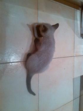 Desarrollo y socialización del gato