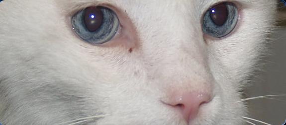 Trucos para saber si nuestro gato está enfermo