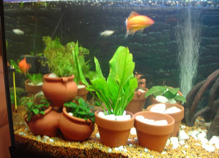 La reproducción en las plantas de acuario
