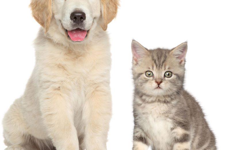 Problemas de micción en perros y gatos