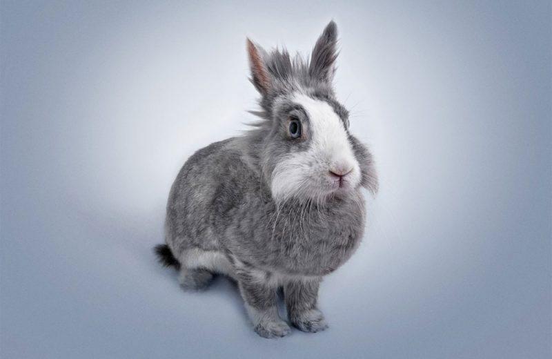 Enfermedades de los conejos más habituales
