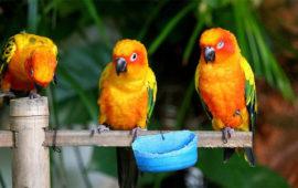 La luz en las aves