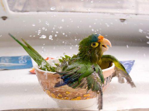 Baño aves
