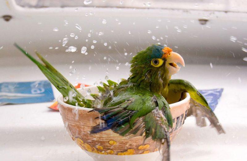 Bebederos y baños para aves