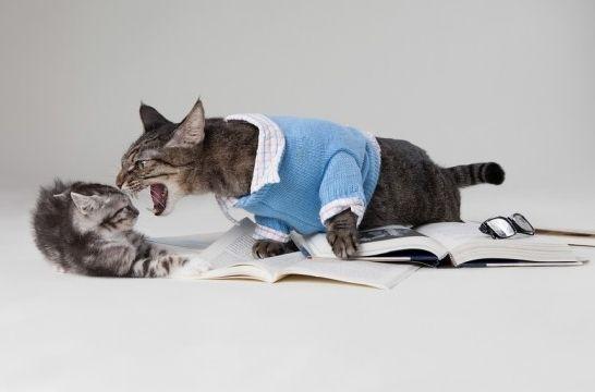 Cinco cosas que estresan a tu gato, y que tal vez no sabías