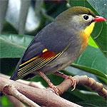 Alimentación de las aves insectívoras