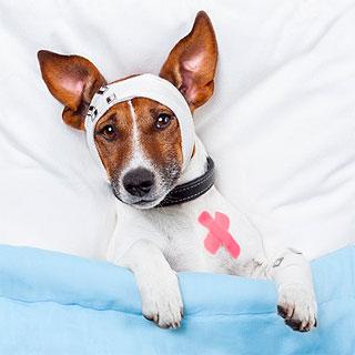 Cuidados de las mascotas después de una cirugia