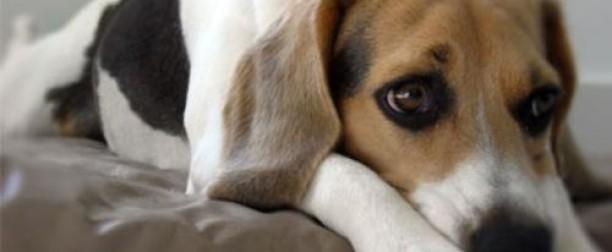 Depresión estacional en perros