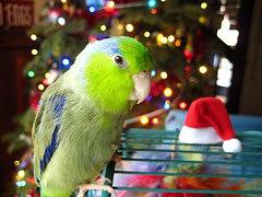 Animales exóticos: cómo transportarlos en invierno