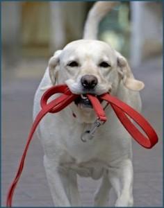 Parques para perros en la ciudad, horarios y normativa