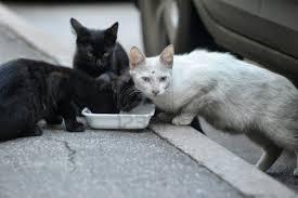 Condenan al Ayuntamiento de Madrid por no permitir alimentar a una colonia de gatos callejeros