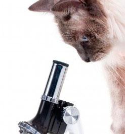 Como tomar una muestra de orina en nuestras mascotas