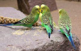 Diarreas en aves