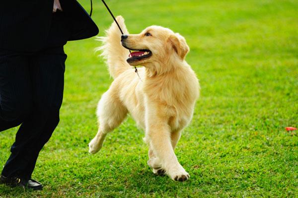 Paseando con nuestros perros de manera tranquila y relajada