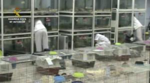 El absurdo drama de seguir produciendo animales de mala manera mientras miles se pudren en protectoras y perreras