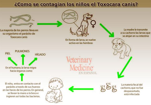 Ascaridiasis en perros y gatos