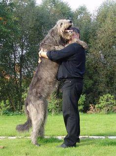 El crecimiento de los perros de razas grandes