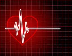 Importancia de los controles cardiológicos en Medicina Veterinaria